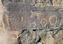 Petroglyphs at Shay Canyon (Ron Wolf) Tags: archaeology circle utah fremont nativeamerican hunter petroglyph anthropology rockart bowandarrow blm zoomorph anthropomorph anthromorph shaycanyon