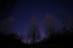 (Chris Harrington) Tags: trees night stars astrophotography
