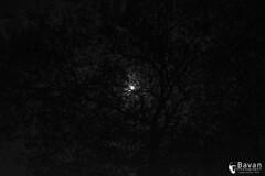 Texture (nbavan7) Tags: blackandwhite moon white black tree texture monochrome dark branch branches sl trincomalee bavan nbavan7