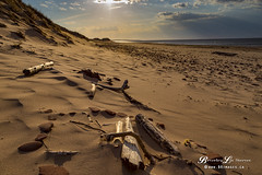 Cavendish Beach, PEI (Beverley Lu) Tags: wood travel sunset summer seascape beach water canon landscape outdoors spring sand scenery warm scenic footprints peaceful driftwood serene rays pei cavendish 6d 24105mm cavendishbeach canon6d