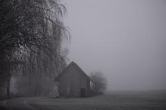 untitled (Batrice...) Tags: trees fog barn schweiz switzerland nebel scheune obwalden trauerweide wichelsee