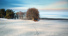 Walk around the lake. (augustynbatko) Tags: trees winter sky lake snow ice nature clouds landscape outdoor traces clues