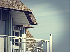 2012-09-04 um 13-33-47 (torstenbehrens) Tags: blau weis strohdach haus veranda himmel olympus e510 digital camera fehmarn on1 on1pic