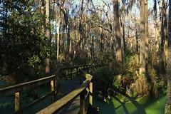 IMG_7383 (SweetMeow) Tags: forest shadows southcarolina boardwalk marsh conservancy hiltonheadplantation whoopingcranepondconservancy