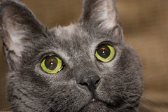 GMK (wacamerabuff) Tags: cat chat gato neko katze paws  gatto diekatze necko