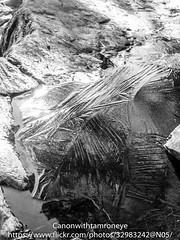 Uutela 1.3.2016 (canonwithtamroneye) Tags: leica winter urban bw nature digital suomi finland coast spring helsinki raw ps panasonic uutela dmclx5