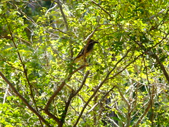 Hidden Bird (failing_angel) Tags: florida wetland esterobay fortmyers fortmyer sixmilecypressslough sixmileslough 240515 sixmilecypresssloughpreserve linearecosystem naturaldrainageway
