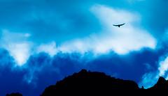 Eagle at Masca (Thomas Tolkien) Tags: landscape education teacher tolkien thomastolkien tomtolkien tolkienphotography httpsthomastolkienwordpresscom