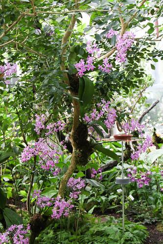 Orchideenschau März 2016