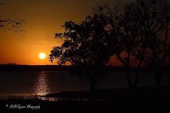Golden Sunset (RMIngramPhotos.com) Tags: sunset nature landscape goldensunset magichour sunsetsandsunrises daysend nikonphotography lakepatcleburne lakefrontsunset goldencolorsofsunset subtlecolorsofagoldensunset scenesofcleburne