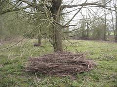 Wooden debris left after flooding (Stivulya / ) Tags: debris have after floods cwd coarsewoodydebris salixalbacaerulea