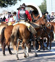 Trail Riders get Ready (wyojones) Tags: horse hat wagon texas boots houston parade vest cowboyhat saddle trailride houstonlivestockshowandrodeo wyojones houstonlivestockandrodeoparade