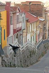 Kamizake (MRO Saavedra) Tags: valparaiso skate skateboard felipe valpo astorga valparaguayo mrofilms