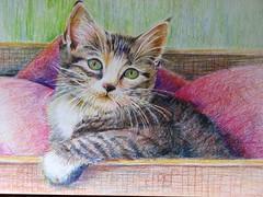 Un peu de douceur (geneterre69) Tags: art chat paint cayonsdecouleurs