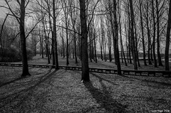 Trees 02 (Luca Frigo) Tags: lago natura lamar pontile terlago