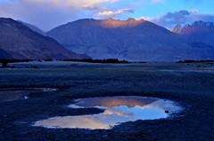 Hunder in Nubra Valley at Sunset (pallab seth) Tags: india mountain tourism landscape evening asia tour dusk himalayas sanddunes ladakh nubravalley hunder joyrides camelsafari bactriancamel jammuandkashmir diskit unknownplace camelusbactrianus colddesert