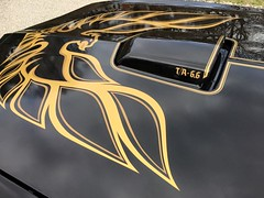 """1978 Bandit Trans Am • <a style=""""font-size:0.8em;"""" href=""""http://www.flickr.com/photos/85572005@N00/25966530060/"""" target=""""_blank"""">View on Flickr</a>"""