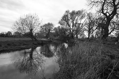 17/52 - Parklife (stopdead2012) Tags: park trees monochrome river landscape berkshire swallowfield 52weeksofphotography