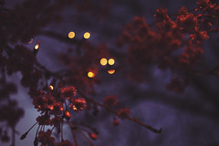 ... (ginaballerina.) Tags: pink flowers light red flower tree art nature up look yellow night project dark way fun lights this evening spring woods nikon pretty all dof purple im bokeh know branches great tags gina na give queens type haha these nikkor making ya such okay wheee purpleflowers procrastinate d600 woooo wheeeeeeeeee morebokeh ginaballerina ginavasquez typity typinnnn