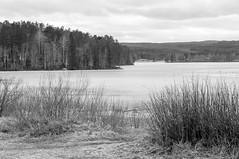 fire in my hands (Kalense Kid) Tags: bw lake water monochrome forest landscape sweden headland matfors skevik vikarn vsternorrlnd