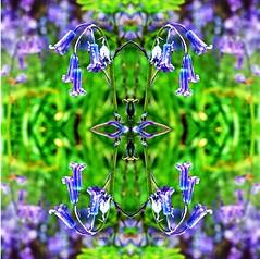 2016-04-27 symmetric flowers (april-mo) Tags: art experimental symmetry symmetric experimentalphoto experimentaltechnique