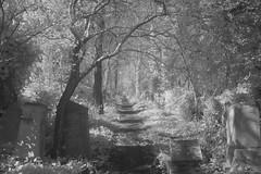 Pathways across the cemetery (IanAWood) Tags: london nikond70 urbandecay stokenewington digitalinfrared abneyparkcemetery londoncemeteries victoriancemetery fullspectrumphotography walkingwithmynikon nikkorafs20mmf28d lbofhackney 720nmirconversion londonsmagnificentsevenvictoriancemeteries urbanir
