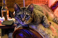 upload (tj_arriaga) Tags: cats pets animals square nikon tabby blues squareformat lounging reds ambience coloredlighting instagramapp editedoninstagram nikond5500