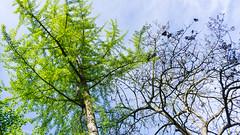 From the ground (manuelserafini) Tags: sky tree green primavera nature foglie italia earth branches natura albero rami