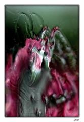 Art Déc'Eau - B'eau'vidés - Les deux boucs (Nadine.Dvx) Tags: macro eau abstraction création waterdropmacro tableaudeau nadinedvx artdéceau
