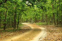 Inside National Park (Kaniz Khan 2009) Tags: road park trees green forest nationalpark curved bangladesh gazipur salforest bhawalnationalpark salbon