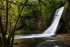 Cascade-DSC_7408 (ArnoC.photo) Tags: france macro nature forest nikon eau long exposure sigma paysage 1770 cascade extrieur chute deau fort calme isere rhonealpes whater poselongue d7100