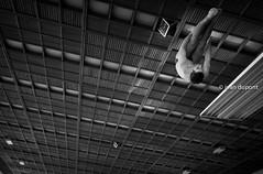 OPEN BELGIAN DIVING CHAMPIONSHIPS, Brussels, Belgium (monsieur I) Tags: brussels sports sport canon belgium competition diving poseidon intheair acrobatic 2016 canoneos5dmark3 monsieuri royalbrusselsposeidon openbelgianchampionships