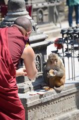 Monk Meets Monkey (Jgunns91) Tags: travel nepal travelling religious temple nikon asia peace buddhism wanderlust explore discover natgeo swayumbhunath