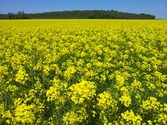 Paysage francilien (frecari) Tags: flowers france nature fleurs french landscape spring paysage iledefrance printemps
