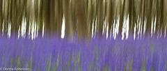 Love it or hate? (Donna Hampshire) Tags: woodland landscape hampshire panning bluebell donnarobinson donnahampshire