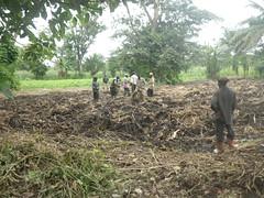 RIMG1154 (WorkingVillages) Tags: congo ruzizi wvi southkivu workingvillages