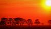 amanece en la ruta (.el Ryan.) Tags: santa sunset sun santafe sol argentina set amanecer fe