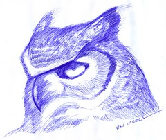 bho a lapicero (ivanutrera) Tags: bird animal pen sketch drawing ave owl pajaro draw dibujo ilustracion pjaro lapicero buho boligrafo dibujoalapicero dibujoenboligrafo