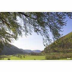My Valley in Springtime (horstmall) Tags: spring printemps beech springtime fagus buche gutenberg sylvatica schwbischealb oberlenningen swabianalps lenningertal frhlig schlattstall jurasouabe bassgeige bruckerfels horstmall