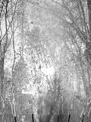 P4290430 (Andrey Narchuk) Tags: park portrait blackandwhite black spring moscow