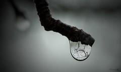 La gota que tena un rbol (demianastur) Tags: water agua nikon drop gota reflejos d3200