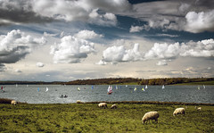 Sky, Ships and Sheep (Steve Millward) Tags: england sky cloud nature water animal season 50mm countryside boat nikon raw sailing sheep leicestershire outdoor perspective sharp d750 rutland fullframe fx rutlandwater primelens imagequality fixedfocallength