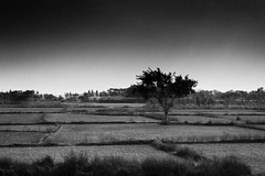 MoNochrome (Vilvesh) Tags: travel bw monochrome field canon landscape photography tradition agriculture kolkata trainjourney westbengal cwc chennaiweekendclickers