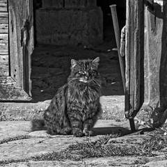 Der Boss (M. Franziska D.) Tags: natur pflanzen bume katzen frhling blten weiher badwindsheim