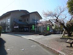 16i5119 (kimagurenote) Tags: apricot ume  japaneseapricot  prunusmume sogabairin   odawarakanagawa