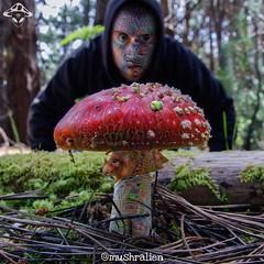 Pretty Fly... Agaric (mushralien) Tags: mushrooms weed acid 420 lsd thc trippy psychedelic magicmushrooms psilocybin hallucinogen psychonaut lsd25 stoner acidtrip selfie dmt fifthdimension psychedelicart hallucinogens openyourmind 420friendly trippyart raiseyourvibration weedstagram howsyourselfiegame mushralien psilocybinart