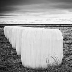 Ensilage (mattias.ljunggren) Tags: bw monochrome zeiss finland spring vaasa vr vasa svartvitt sterbotten ostrobothnia ensilage sderfjrden sonya7 loxia250