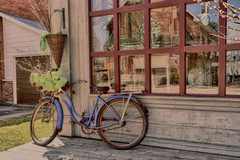 Bicycle with Pussy Willows (gabi-h) Tags: window bicycle reflections rustic northumberland storefront smalltown warkworth pussywillows gabih windowswednesday