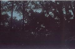 (bensn) Tags: trees light film japan zeiss contax carl g2 f2 45mm fujicolorpressdxf800