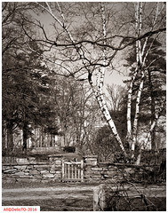 To the garden (DelioTO) Tags: ontario canada architecture rural landscape blackwhite spring woods doors trails april historical 4x5 toned schneider lensed 210mm autaut aph09 panx64